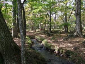 N1水林自然林